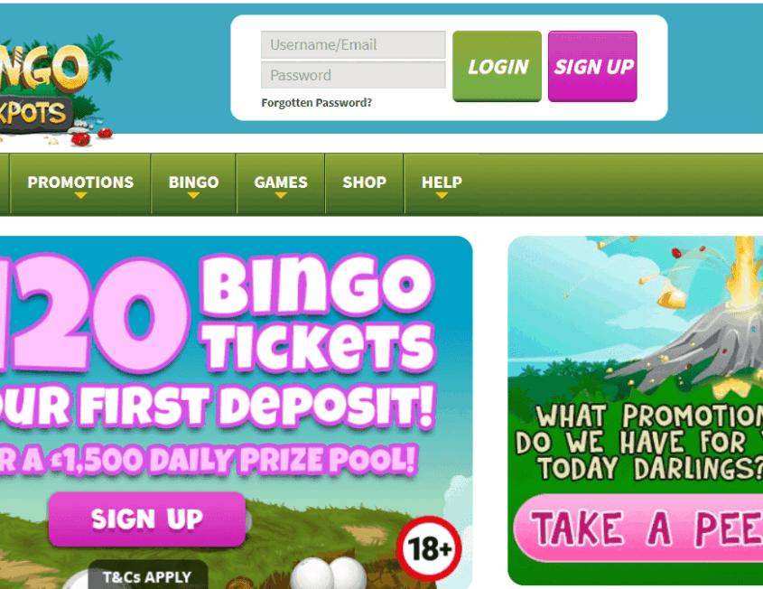 dino bingo login